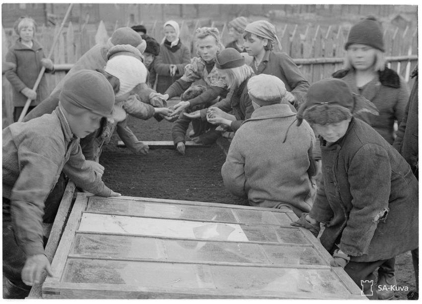 Kuittisten kansakoulusta: Kansakoululapset istuttamassa kaalia lavoihin.