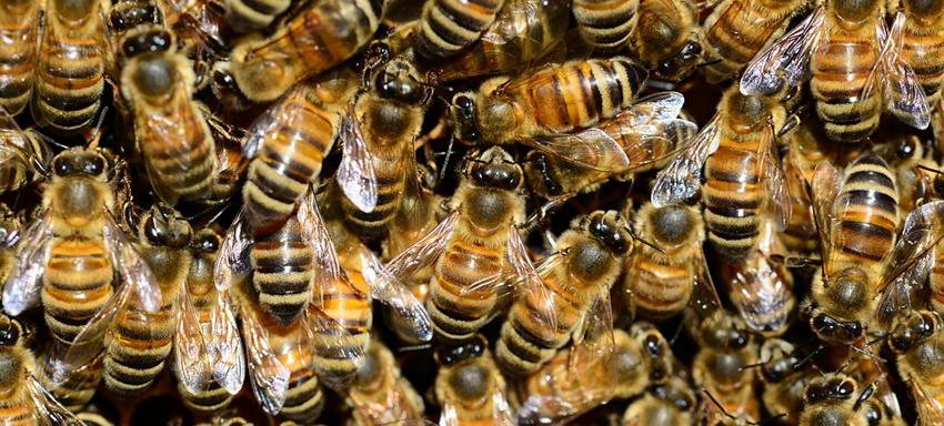 Mehiläiset I
